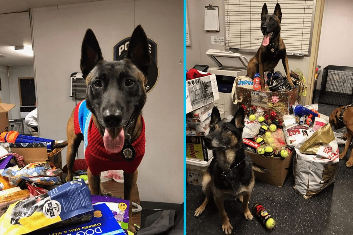 These NYPD K9 units are on a mission to collect treats & toys for deployed military fighting overseas.