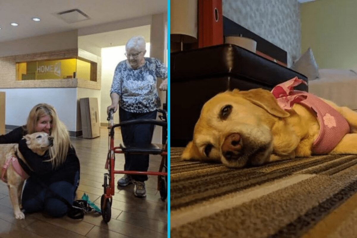 """This extended-stay hotel allows guests to adopt a dog right from the lobby with its """"Fostering Hope"""" program."""