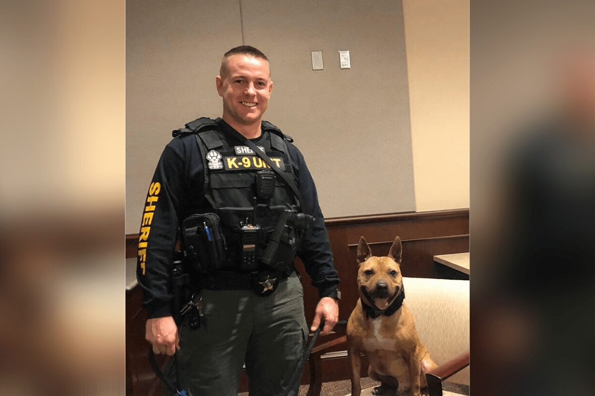 Adorable Pit bull named Nibbles was rescued from a dog fighting ring joins sheriff's office as K9 officer.