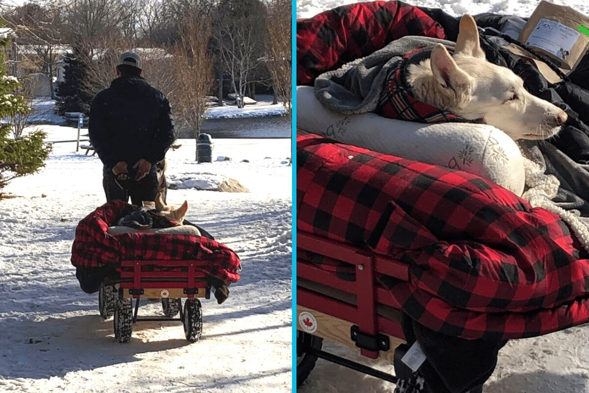 Man takes his paralyzed dog on wagon rides every day so she can still enjoy the world.